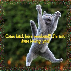 Ideas For Humor Monday Morning Kitty Week End Quotes, Sunday Quotes Funny, Monday Quotes, Funny Quotes, Funny Memes, Funny Shit, Hilarious, Funny Sarcasm, Funny Stuff