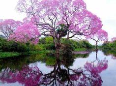 arbol-hermoso