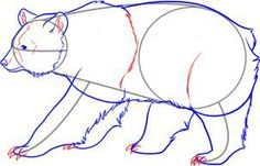 How To Draw Bears Step-By-Step: STEP 10. Now sketch in the claws and then draw in the rest of the ear definition until you have a nice textured filling in the bear's ear. Once that is done, detail the body by drawing the shoulder and thigh lines, and then lastly, add that definition to the face. Erase the lines and shapes that you drew in step one.