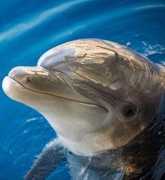 BLOG OBRAZKI: DELFINY Orcas, Beautiful Sea Creatures, Animals Beautiful, Cute Baby Animals, Animals And Pets, Mon Zoo, Dolphin Tale, Baby Dolphins, Bottlenose Dolphin