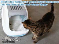 So hältst du dein Katzenklo länger frisch