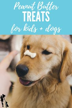 Teaching Kids Responsibility Through Pets. Having pets in your home can be a great way to teach children responsibility. Here are some easy ways kids can help. Parenting Advice, Kids And Parenting, Teaching Kids, Kids Learning, Kid Picks, Dogs And Kids, Pet Life, Raising Kids, New Baby Products