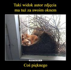 Cut Animals, Animals And Pets, Funny Animals, Cute Pupies, Weekend Humor, Cute Cartoon Wallpapers, Beautiful Dogs, Nice View, Funny Cute