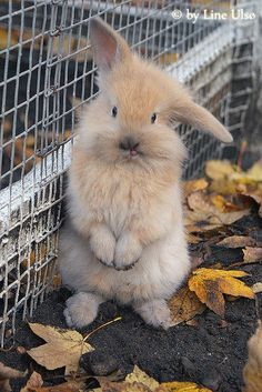 Cutest bunny ever!