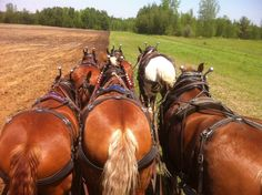 I just love the composition of this photo. And the fact that a modern farm is using horses to plow