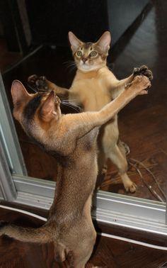 """Shall we dance?""  (via katherine00)"