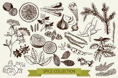 Ink hand drawn spice collection by Yevheniia on @creativemarket