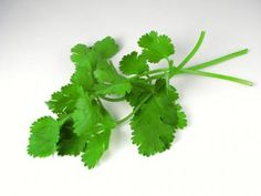 Coriander and Cilantro