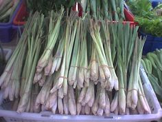 Love the flavor and aroma of lemongrass? Here are tips on how to grow it and what you can do with it!