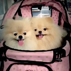 these are so cute. we love poms