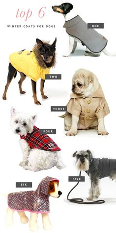 The BEST 6 Coats for Dogs this Winter