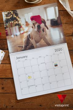 Create a custom calendar with your favorite photos - now up to off. Funny Animals With Captions, Funny Animal Memes, Cute Funny Animals, Cute Baby Animals, Animals And Pets, Cute Cats, Cute Puppies, Dogs And Puppies, Animal Pictures