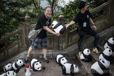 香港・ランタオ(Lantau)島の天壇大仏(Tian Tan Buddha)前の階段で張り子パンダの設営作業をに当たるボランティア。世界自然保護基金(WWF)とのコラボレーションで仏人アーティストのポロ・グランジョン(Paulo Grangeon)氏が手掛けた(2014年6月10日撮影)。(c)AFP/Philippe Lopez ▼11Jun2014AFP|張り子パンダの大群、ランタオ島で大仏を参拝? http://www.afpbb.com/articles/-/3017339 #Tian_Tan_Buddha