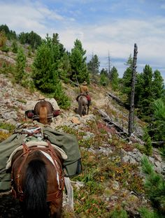 Keith Swenson, Stone Horse Expeditions & Travel, leads a horse back expedition over a high pass into the remote wilderness of Khan Khentii Special Protected Area in Mongolia.  #travel, #Vacation, #vacation-ideas, #outdoor, #photography, #horses, #Mongolia, #trekking, #Asia, #adventure-travel, #eco-travel. www.stonehorsemongolia.com