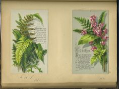 Victorian ferny postcards in an old album album, dated 1880 and 1881