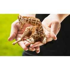 A tiny giraffe to be my pet. I've never wished something existed so much before I saw this.