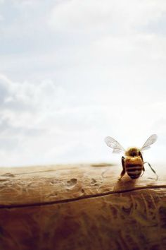 ≗ The Bee's Reverie ≗   bee art
