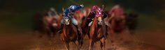 Best virtual horse racing in the world! Virtual Horse Racing, Horse Online, Horse Games, Camel, Horses, Digital, World, Animals, Animales
