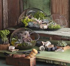 Terrariums have become hugely popular lately. If you& interested in creating your own capsule of green, check out these incredible terrarium ideas plus instructions for making your own. Terrarium Diy, Hanging Terrarium, Terrarium Containers, Glass Terrarium, Terrarium Supplies, Glass Containers, Garden Planters, Succulents Garden, Glass Garden