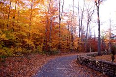 Parc du Mont Saint Bruno by Abdou.W, via Flickr Parc National, Autumn Activities, Things To Do, Saints, Country Roads, Apple, Photo And Video, World, Fall