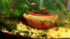 Shop - aquarium fish bowl #YouAqua #Aquarium #Aquariumhobby #aquariumfish #aquariumsupplies