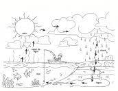 Resultado de imagen de ciclo%20da%20%C3%A1gua%20para%20colorir Science Experiments Kids, Science For Kids, Nature Activities, Activities For Kids, Water Cycle Project, Kindergarten, Tracing Worksheets, Preschool Education, Life Cycles