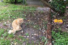 Errant, ce «Grumpy Cat» roux a tout fait pour se faire adopter  Alors qu'il visitait une maison vide dans le but de la mettre en vente, un jeune homme originaire de Floride a récemment fait une rencontre qui a bouleversé sa vie… et celle de celui qui est désormais son nouveau petit compagnon !