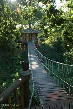 I want a tree house in each of two walnut trees with a bridge connecting the two. :)