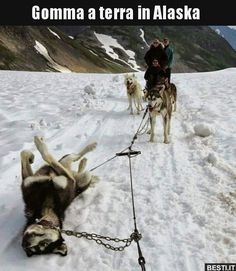 Funny pictures about Alaskan Flat Tire. Oh, and cool pics about Alaskan Flat Tire. Also, Alaskan Flat Tire photos. Funny Pictures With Captions, Picture Captions, Funny Animal Pictures, Hilarious Pictures, Funny Photos, Cute Animals With Funny Captions, Funniest Pictures, Funny Moving Pictures, Funny Chicken Pictures