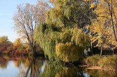 Fall on Winnebago