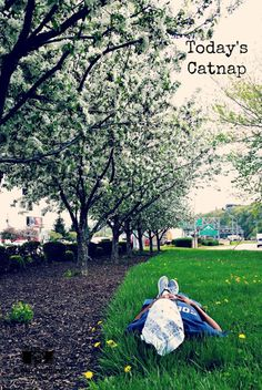 Green grass and lilac trees. The perfect place for a catnap! View the entire collection of catnaps here. Until the next catnap…