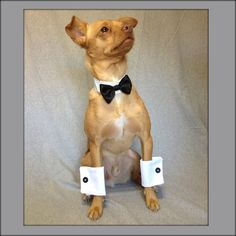 Black Satin Bow Tie Collar and White Shirt Cuffs Wedding Picture Set for a Dog or a Cat. $20.00, via Etsy.
