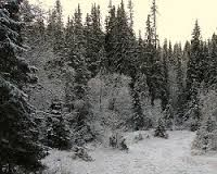 Image result for Boreal (taiga) Forest