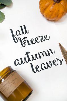 fFall Breeze Autumn