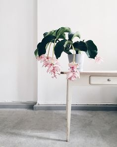 Six House Plants & Planters to try This Spring | coco kelley | Bloglovin'