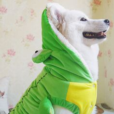 I found some amazing stuff, open it to learn more! Don't wait:https://m.dhgate.com/product/xmas-gift-party-cosplay-suit-for-pet-poodle/393749650.html