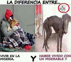 #NoAlMaltratoAnimal #perros #AdoptaNoCompres--In any language--STOP the abuse!!!