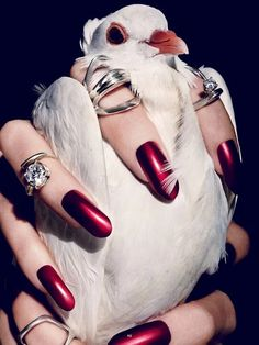 Red nails: The Animal issue viewed by Txema Yeste Jewelry Photography, Art Photography, Fashion Photography, Product Photography, Editorial Photography, Tim Walker, Leila, Nail Art Pen, Jewelry Editorial