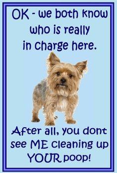 Yorkshire Terrier sooooooo.... CUTE and has lots of SASS!!!!