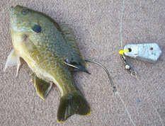 catfishing - live bait - bait tank   diy bait tank for your home, Fishing Bait