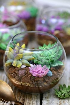 Edible Terrariums - so cute and totally edible! Made with chocolate pudding, cookie crumbs, and fondant succulents. | From SugarHero.com