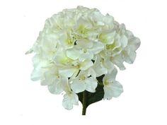 Vara de hortensia o hidrangea, de flor artificial, en tallo con hojas verdes de 74 cms de altura y 20 cms de diámetro. Disponible en colores crema, fucsia, verde, azul y púrpura.