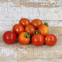 """A Grappoli D'Inverno Tomato - """"winter grape"""" heirloom tomato"""