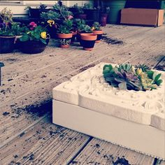 succulent picture frame at { https://www.facebook.com/pages/4th-Ave-Gardens/475906652488415 }