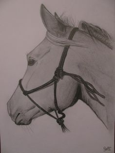 This is amazing!! The halter is perfect made on his head!! I love this picture❤