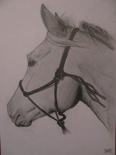 paardenhoofd tekening in stappen - Google zoeken