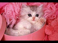 CATs : #Cute #Cats #videos of cute #kittens  2016  #funny cat in kitten ...