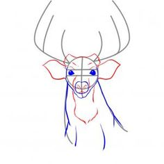 how to draw a realistic deer step 3