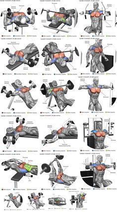 How To Get The Best Chest Workout is part of Chest workouts - Heavy compound exercises are known as one of the main exercises for gaining muscle mass and they should be included in your chest training There are a lot of opinions Chest Workout For Men, Chest Workout Routine, Exercise For Chest, Chest And Shoulder Workout, Home Chest Workout, Men Exercise, Shoulder Workouts For Men, Chest Routine, Chest Mass Workout