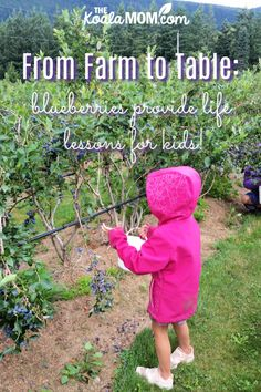 From Farm to Table: blueberries provide life lessons for kids! We spent half an hour picking blueberries and two days turning those blueberries into food. here's what I did with 28 lbs of blueberries, and how the kids helped! Lessons For Kids, Life Lessons, Book Activities, Preschool Activities, Growing Blueberries, From Farm To Table, Blueberry Picking, Home Canning, Nature Study